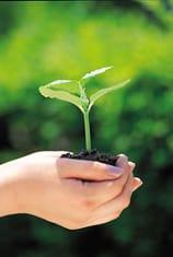 Equilibrio medioambiental